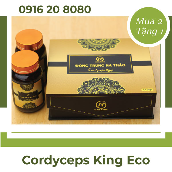 Đông trùng hạ thảo Cordyceps King eco